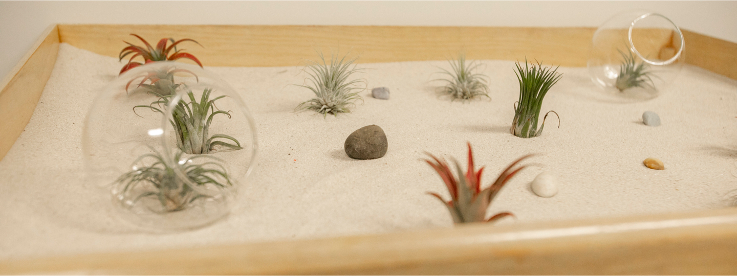 Air plants in the sand